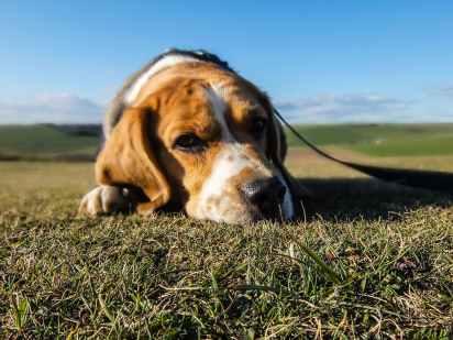 animal dog pet sad