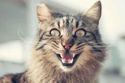 animal animal photography blur cat