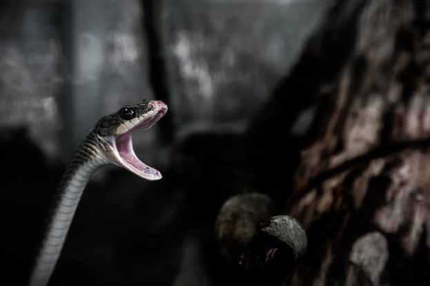 animal snake reptile closeup